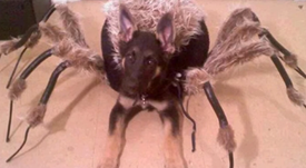 Thumbnail Halloween Costume Ideas For Your Pooch