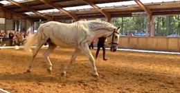 Slow Motion Horse Will Have You Speechless!