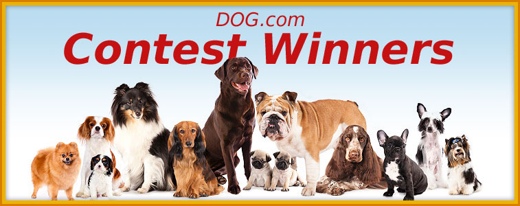 Dog.com Contest Winners