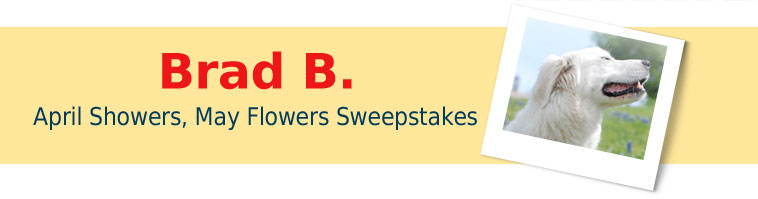 Dog.com's April Showers, May Flowers Giveaway Winner