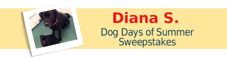 Dog.com's Dog Days of Summer Sweepstakes Winner