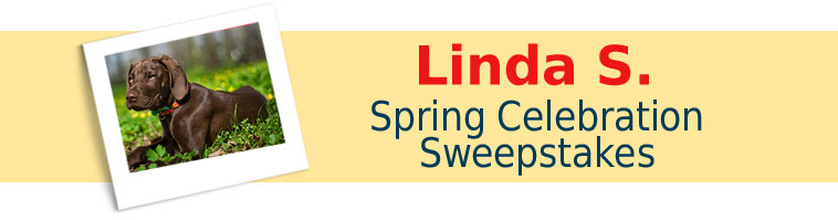 Dog.com's Spring Celebration Sweepstakes Winner