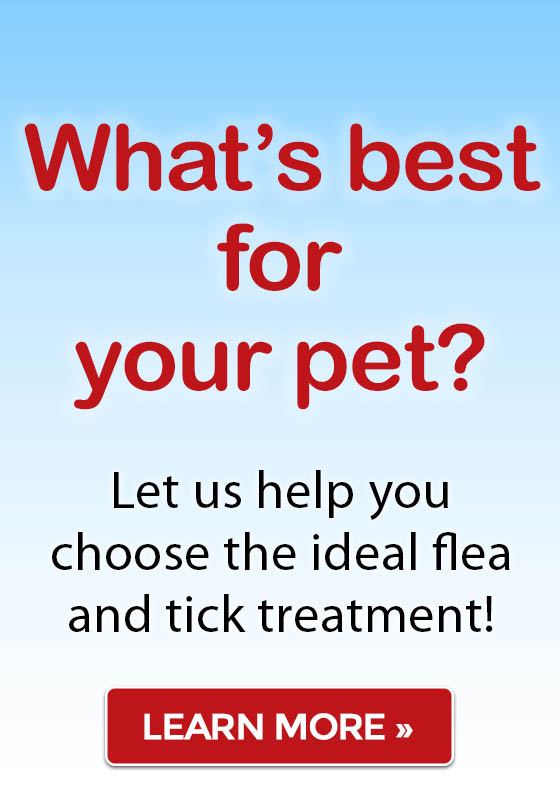 Let us help you choose the ideal flea and tick treatment! Shop now »