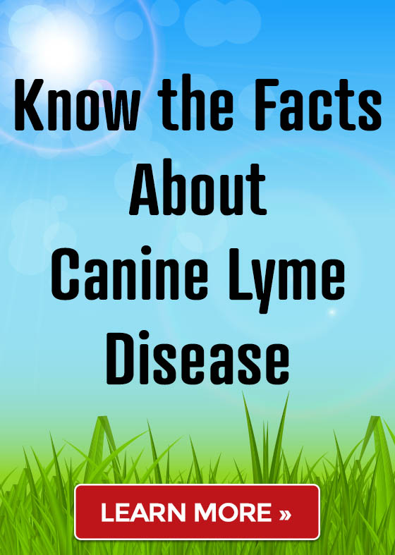 Know the Facts About Canine Lyme Disease! Learn More »