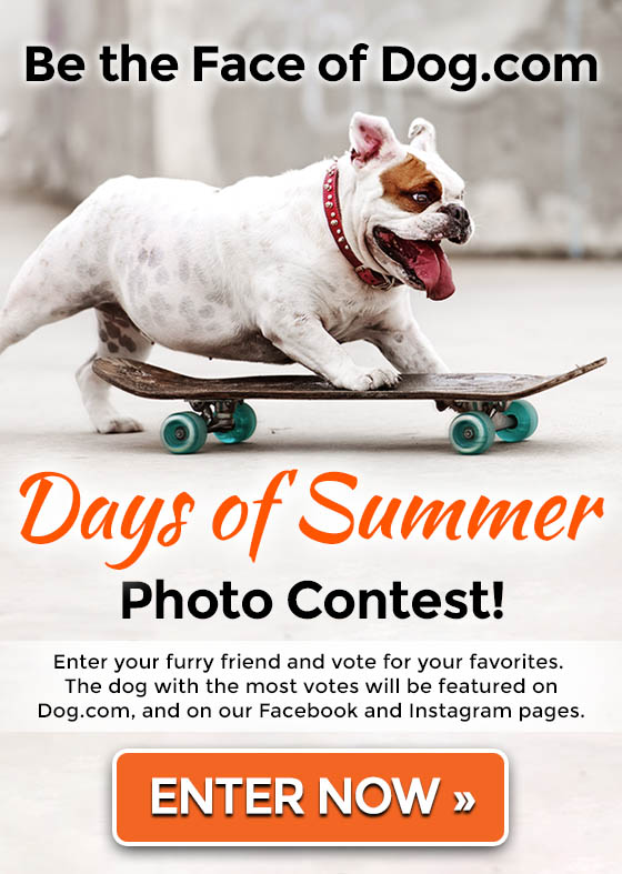 Be the Face of Dog.com's Days of Summer Photo Contest! Enter Now »