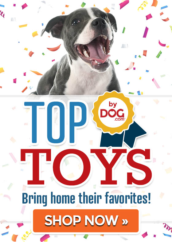Top 5 Dog Toys! Shop now »