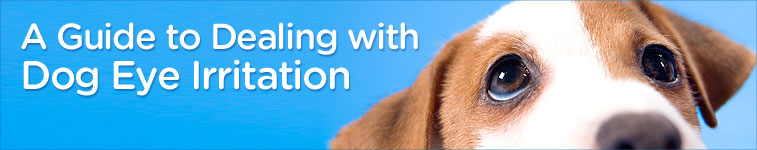 A guide to dealing with dog eye irritation