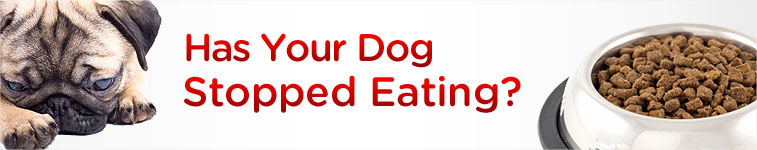 Has your dog stopped eating?